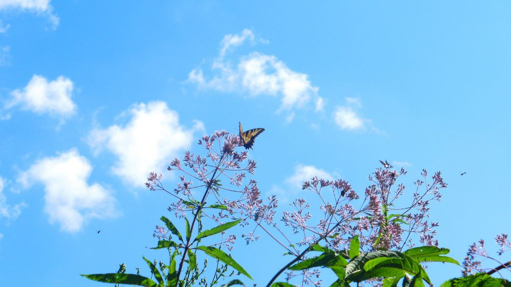 Butterfly with sky
