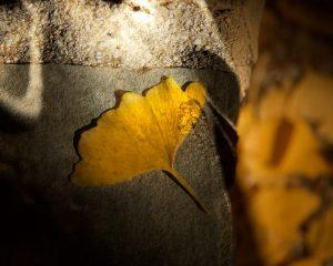 Buddah Leaf